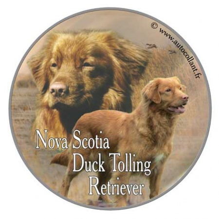 Nova Scotia Duck Tolling Retriever 1